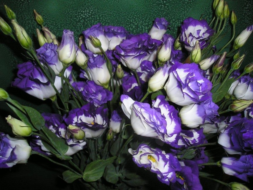 10 most expensive flowers in the world orchids roses priceless lisianthus mightylinksfo